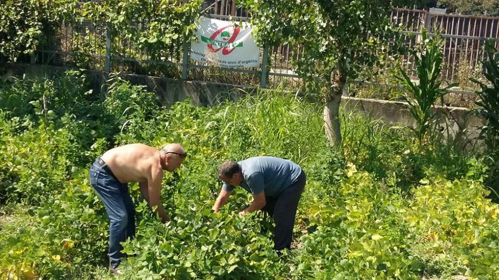 Pomodori + Volontariato = Futuro